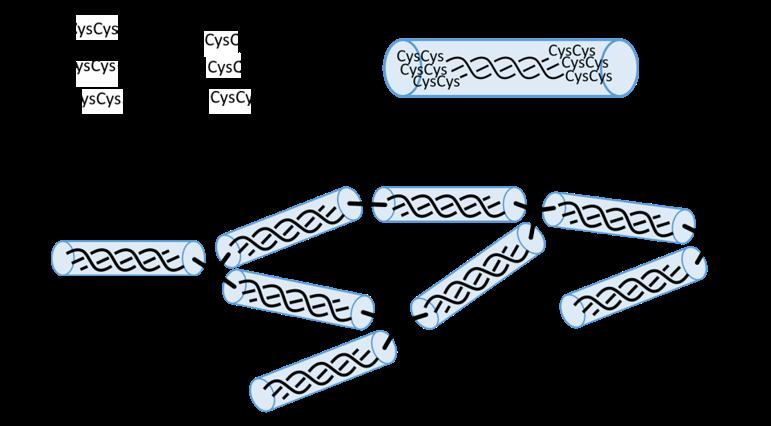 人工コラーゲン模式図